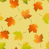 Vector seamless background, autumn maple leaves, maple leaf seamless pattern