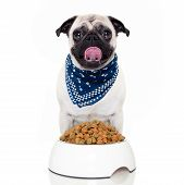 pic of sticking out tongue  - hungry dog with food bowl ready to eat sticking out the tongue - JPG