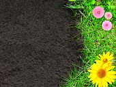 Summer background with green grass, flowers and soil