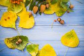 Autumn Background Leaves Fruits Blue Table