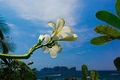 Idyllic Blossom Blooming Trees