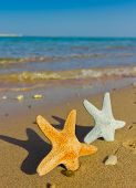 Beautiful Sea Stars Outdoor