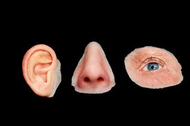 pic of eye-sockets  - Artificial Colored Silicone Made Facial Prostheses Ear Nose Eye Isolated on Black Background - JPG
