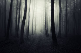 pic of canopy  - Path trough the dark forest with fog - JPG