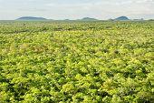 Brachystegia Woodlands from Top of Black Rock, Kasungu National Park, Malawi, Africa