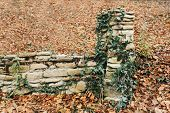 picture of old stone fence  - Old stone fence with foliage plants in autumn park outdoor - JPG