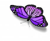 Violet Butterfly , Isolated On White