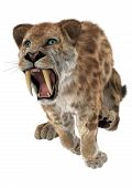 foto of saber  - 3D digital render of a jumping aggressive smilodon or a saber toothed cat isolated on white background - JPG