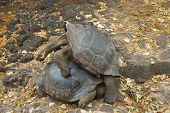 pic of tortoise  - The Gal - JPG