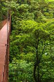 stock photo of canopy  - High suspension bridge allowing tourists to view the wildlife in the forest canopy - JPG