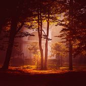 fabulous autumn city park Ukraine