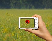 young guy hold up abstract camera and photography single poppy in the field