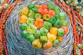 Physalis Harvest