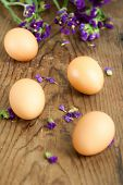Fresh White Eggs With Flowers