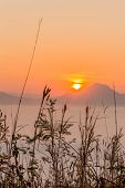 foto of smog  - Poaceae in background warm sunrise with smog sea - JPG