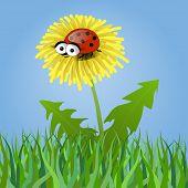 pic of ladybug  - Ladybug on a dandelion on blue background - JPG