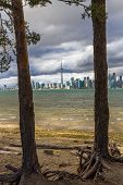 pic of tree snake  - This photo was shot from snake island which is opposite to Toronto city - JPG