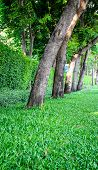 stock photo of row trees  - Row of trees in and outdoor setting - JPG