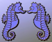 foto of seahorse  - A 3D illustration of two seahorses facing one another - JPG
