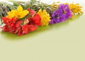 picture of wildflowers  - Colorful spring wildflowers on gradient green background with copy space - JPG