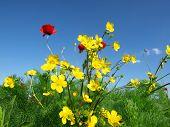 picture of nubian  -  wild flowers - JPG