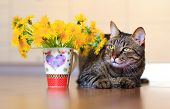 pic of yellow tabby  - domestic pet tabby cat and spring yellow flowers dandelions - JPG