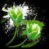 image of color spot black white  - two green and white tulips with spots watercolor on black background - JPG