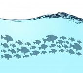 picture of school fish  - Fish school under water - JPG
