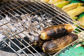 picture of corn cob close-up  - grilled corns on cinder stove close up - JPG