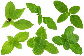 image of mint leaf  - A group of basil and mint leaves isolated on white - JPG