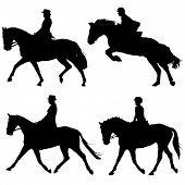 horse and riders