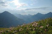 Постер, плакат: Alpine wild flower meadow with a mountain range in the background