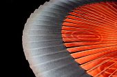 pic of art nouveau  - curve of wooden spanish fan with stylized flower design - JPG
