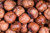 Постер, плакат: Dried Raw Hazelnuts Close Up