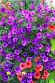 Flores em Tennessee