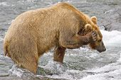 Bear Using The Cell Phone