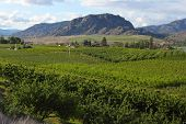 Orchards in Osoyoos, British Columbia