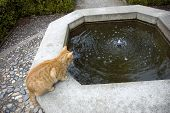 foto of domestic cat  - Cat is hunting fish in the fountain - JPG
