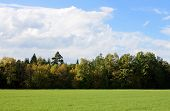 pic of feedlot  - this image shows a forest in fall - JPG