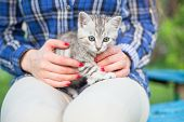 Close Up Of A Cute Kitty-cat In The Womans Hands poster