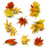 Autumn Falling Leaves Set. Vector Illustration Isolated On White Background. Design Element With Sha poster