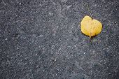 Smooth Asphalt Road. The Texture Of The Pavement, Top View. Autumn Leaf On The Pavement. Minimal Aut poster