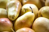 Macro Photo Food Fruit Green Pears. Texture Background Of Fresh Green Pears. Image Of Fruit Product  poster