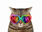The Funny Cat Wears Colored Sunglasses With Inscription Meow. White Background. Isolated. poster
