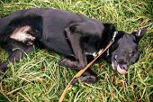 Cute Stray Total Black Dog Lying And Playing In Green Summer Park. Adoption Concept. Save Animals. A poster