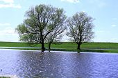 Three Trees Stand By The Lake. Family Of Trees poster