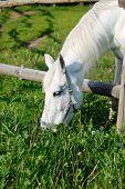 A Horse Eating Grass In A Pen