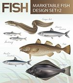 Marketable fish images design set 2. Vector illustration.