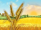 Rural landscape showing a wheat field on a sunny day. Some wheat heads on foreground. Digital illustration.