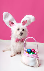 image of bag-of-dog-food  - A cute little dog with rabbit bunny ears sitting beside a bag of assorted easter eggs - JPG
